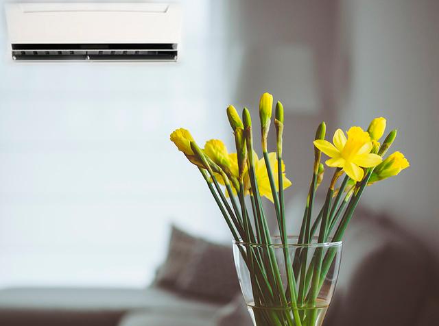 Plantas que viven con aire acondicionado